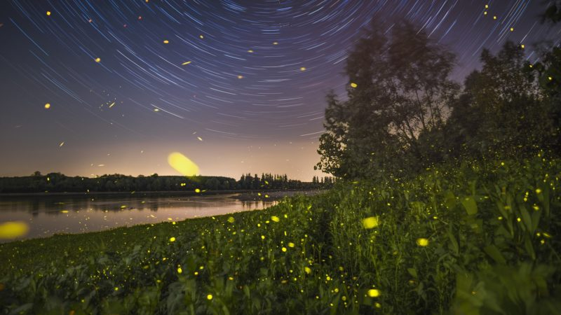 Night among star and fireflies, side of the Po river in the north of Italy.    Biosphoto / Alberto Ghizzi Panizza