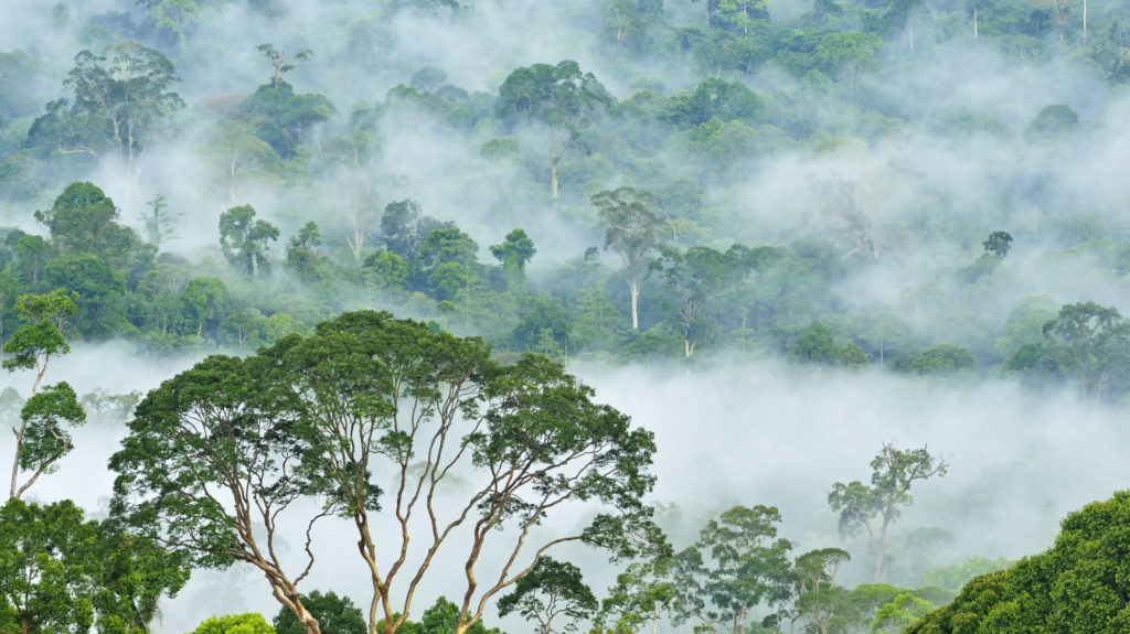 Fogs and mist over dipterocarp rain forest in Danum Valley Conservation Area in Lahad Datu, Sabah Borneo, Malaysia.