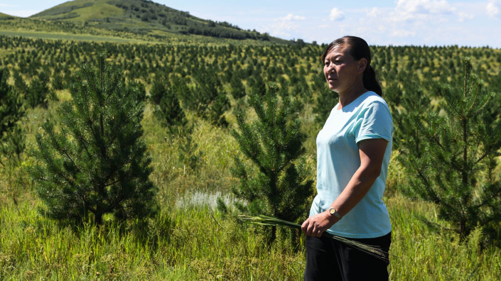 (180810) -- DUOLUN, Aug. 10, 2018 (Xinhua) -- Li Guoqin, a villager of Tiegong Paozi Village and a pioneer in tree planting, checks her Mongolian Scots pine field in Duolun County, north China's Inner Mongolia Autonomous Region, Aug. 9, 2018. Under policy support of local government and joint efforts on afforestation by villagers, the eco-environment of the village has witnessed sound improvement. (Xinhua/Liu Lei) (hxy)