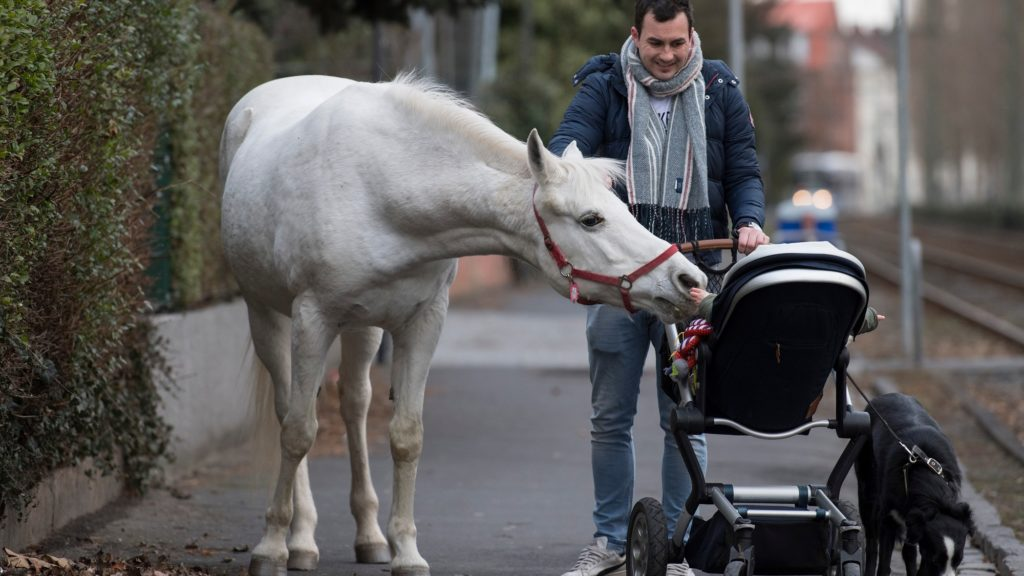 """Horse """"Jenny"""" inspects the baby of Raphael Wöllstein as he pushes the pram through the Fechenheim district of Frankfurt am Main, western Germany, on March 8, 2019. - Arab mare """"Jenny"""" is allowed to decide herself where she wants to spend her time, as her owner opens the stable door every day for his 22-years old horse. """"Jenny"""" has fixed a sing on her holster, reading """"My name is Jenny. I've not escaped, just taking a stroll"""". (Photo by Boris Roessler / dpa / AFP) / Germany OUT"""
