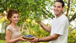 Two young farmers holding basket full of plums