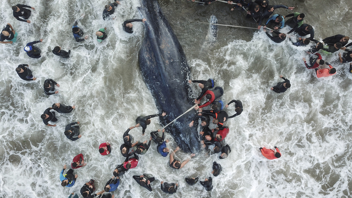 Picture released by Telam showing rescue workers and locals helping a stranded whale in Mar del Plata, Argentina, on April 9, 2018.