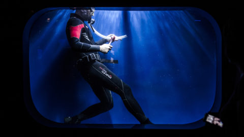 A diver cleans the 'medusa aquarium' in the Aquarium of Genoa on September 13, 2018. 