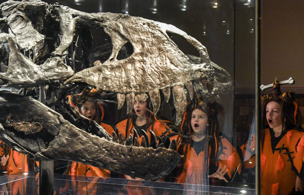 """07 November 2018, Berlin: Children from the ensemble of the children's show """"Spiel mit der Zeit"""" in the Friedrichstadt-Palast are dressed as Neanderthals at a press event in the Museum für Naturkunde at the skeleton head of a Tyrannosaurus Rex. They are advertising for the new production, which will be shown from 22.12.2018 to 27.01.2019. Over 100 kids are involved per performance. Photo: Jens Kalaene/dpa-Zentralbild/dpa"""